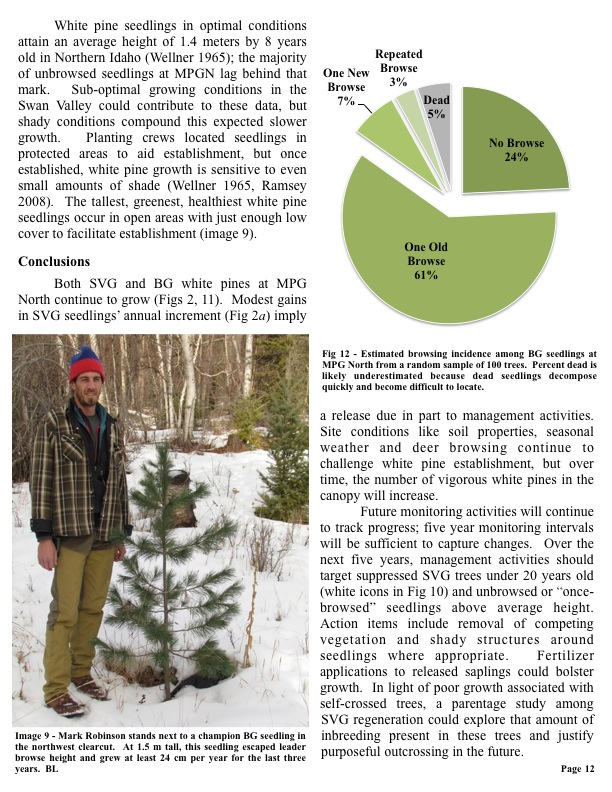 White pine seedlings in optimal conditions attain an average height of 1.4 meters by 8 years old in Northern Idaho...