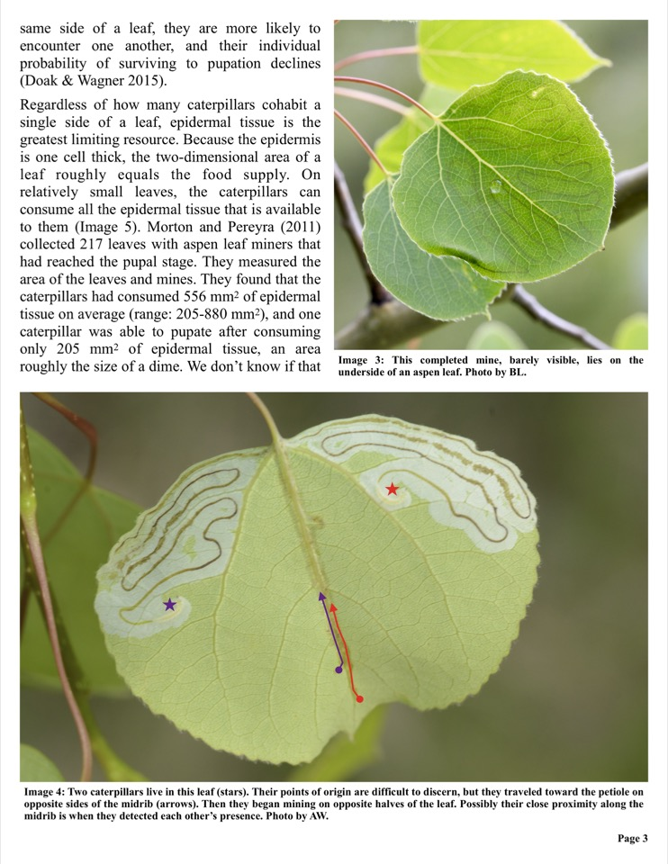 Regardless of how many caterpillars cohabit a single side of a leaf, epidermal tissue is the greatest limiting resource.