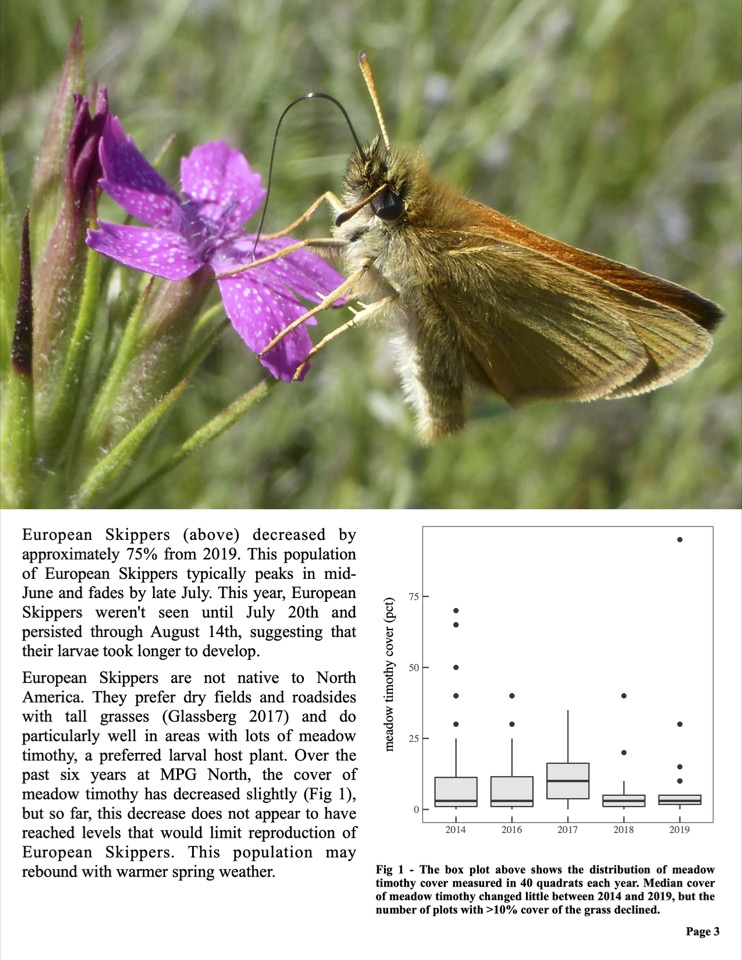 European Skippers (above) decreased by approximately 75% from 2019.